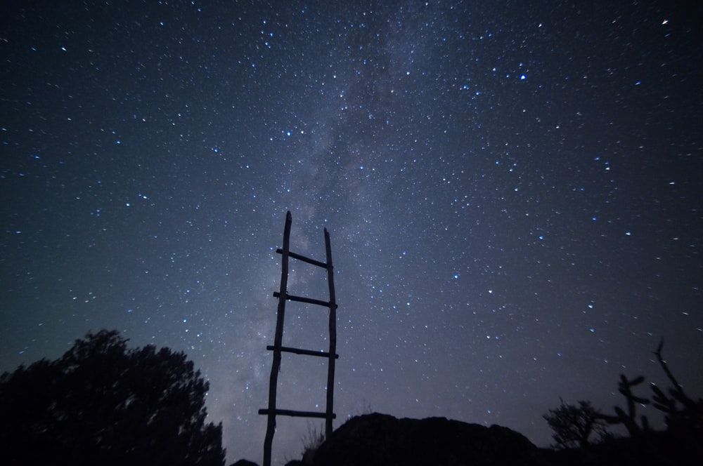 silhouette of trees showing stars at night time