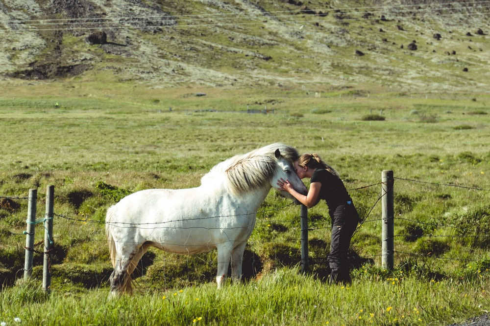 woman kissing white horse on grass field