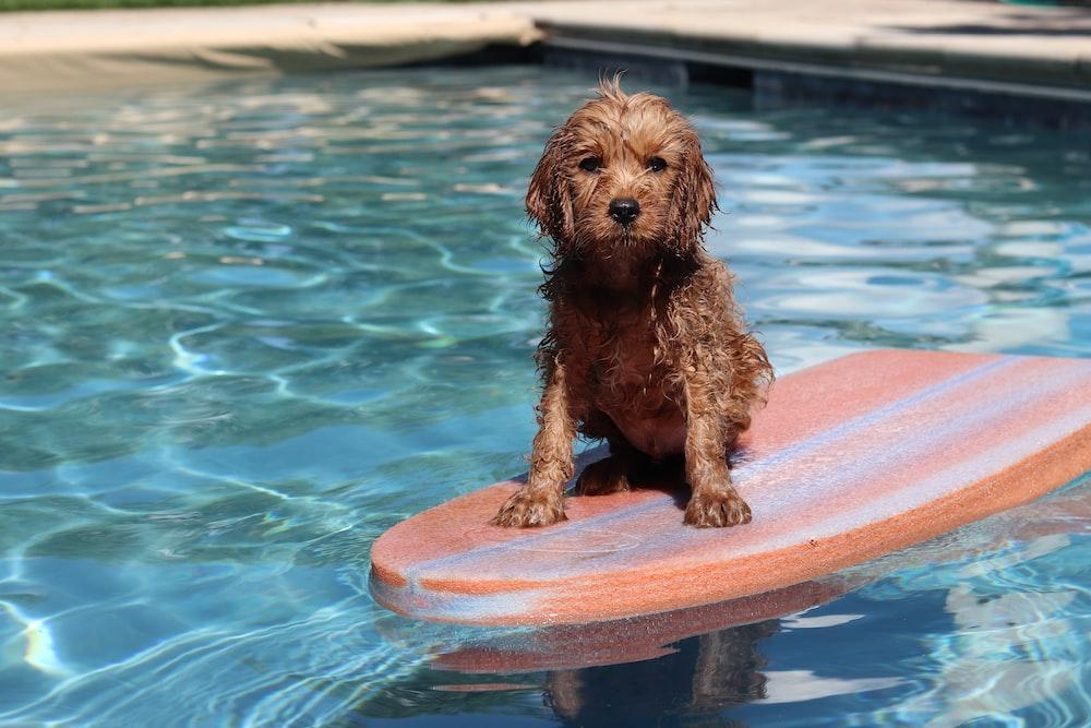 dog on surf board