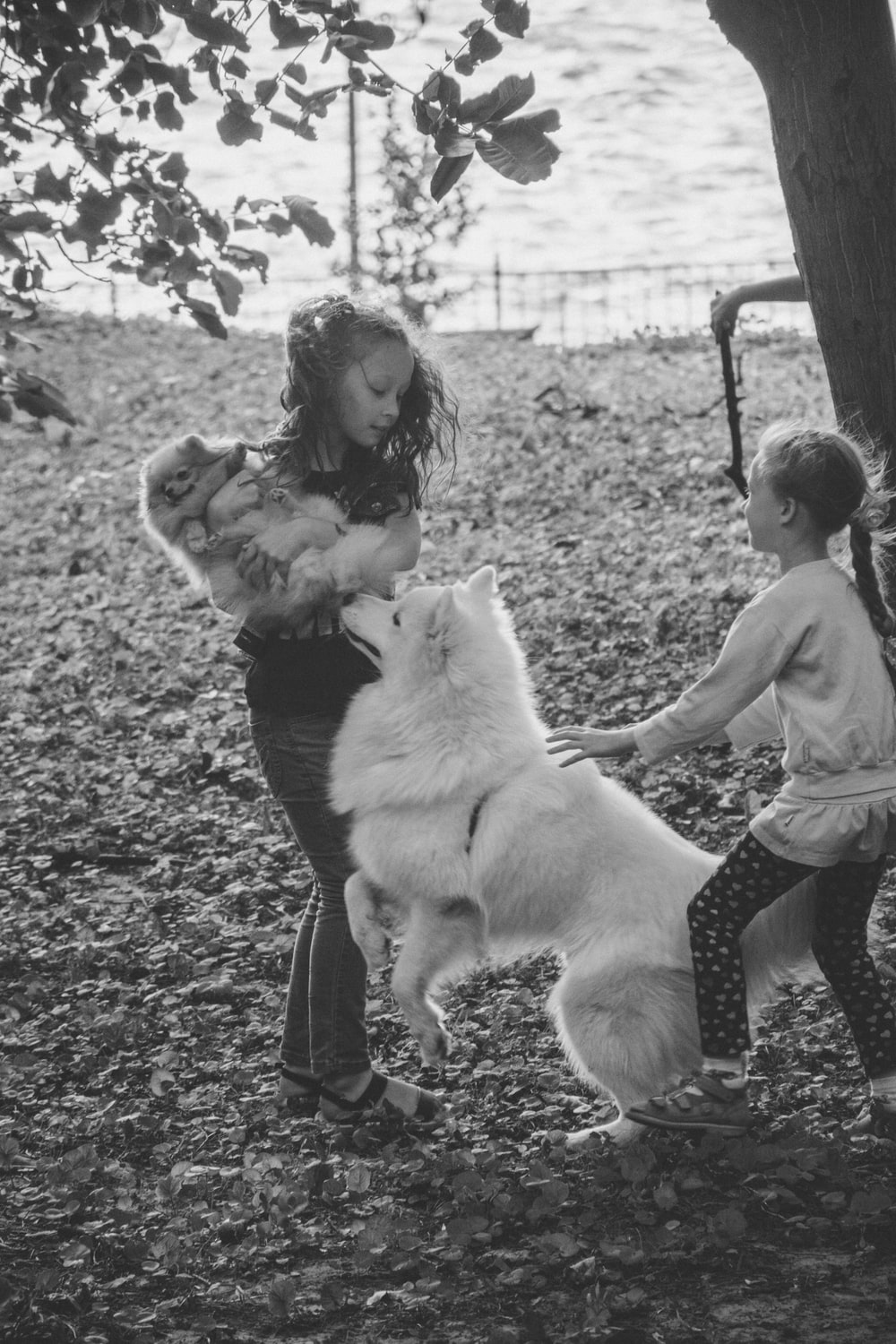 two girls playing with dog near tree