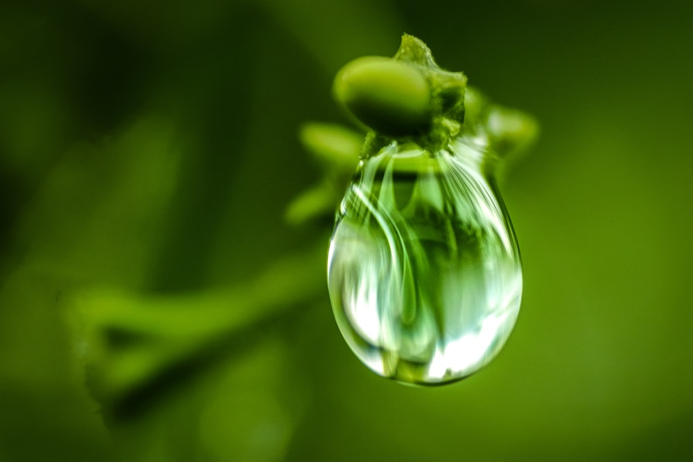 water drop on tip of green plant