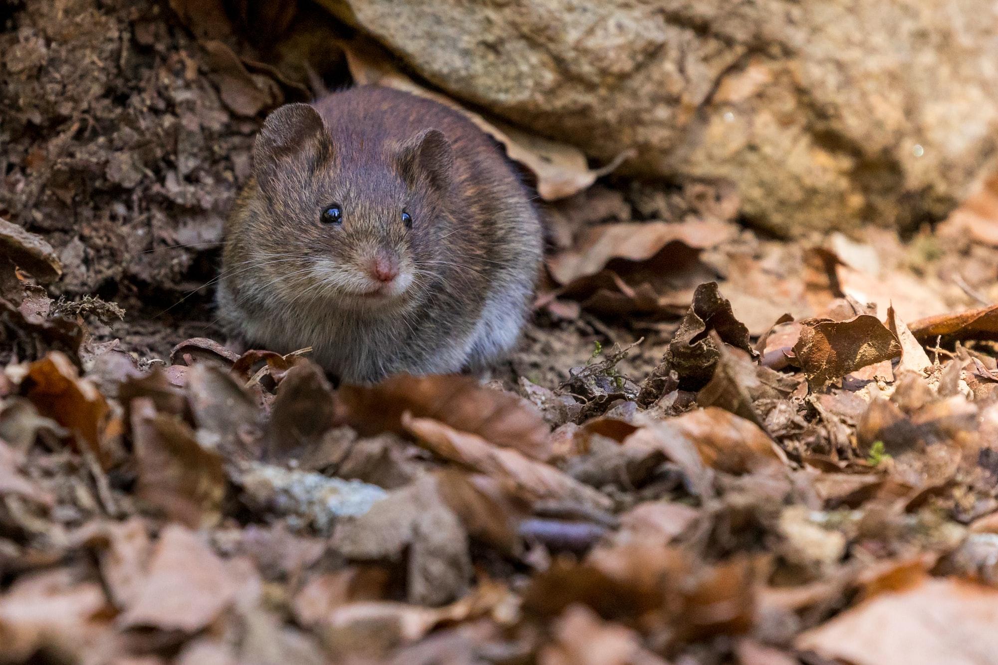 PETA on the Mouse Plague