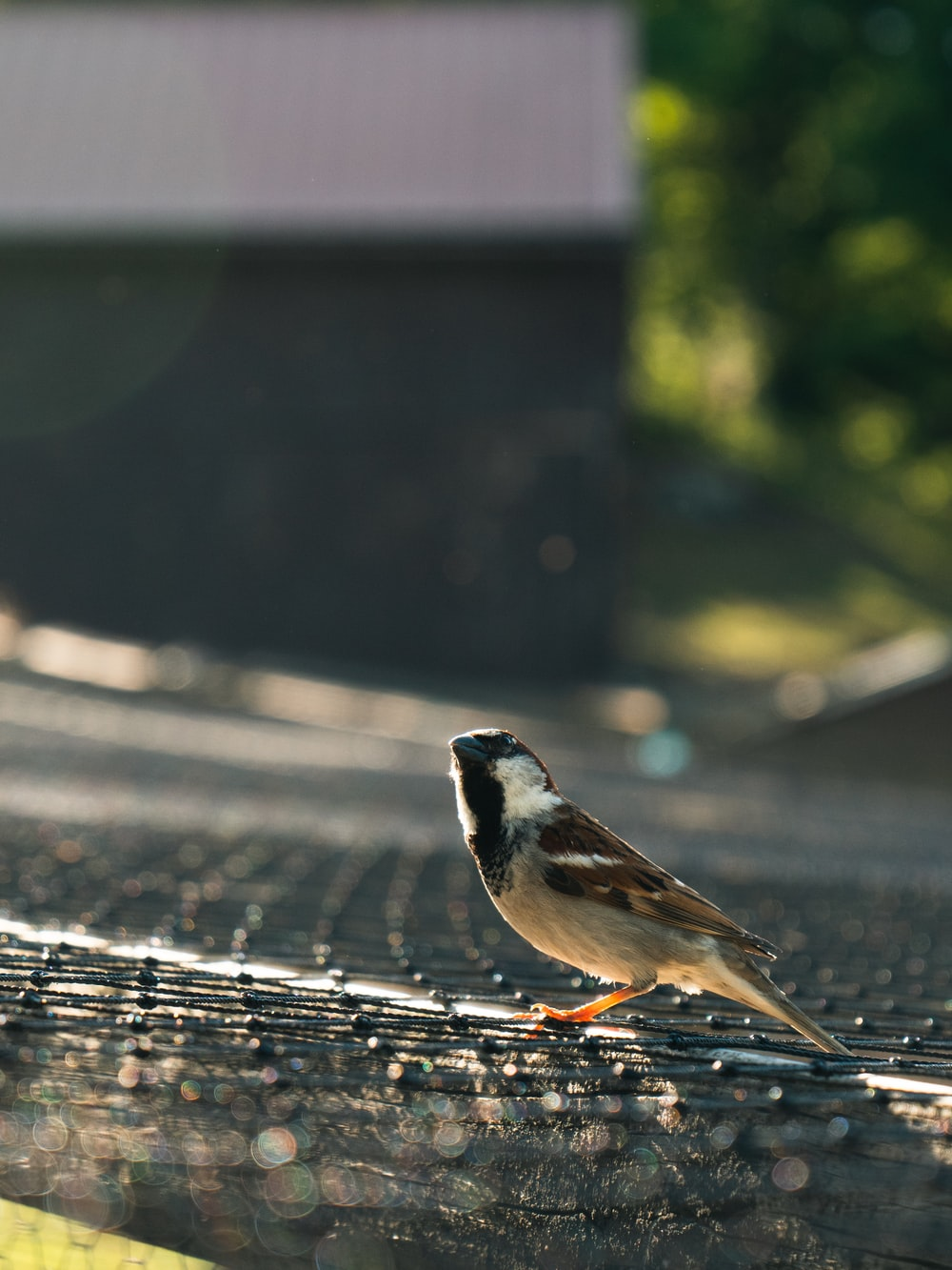 macro photography of white and brown b ird on gray surface
