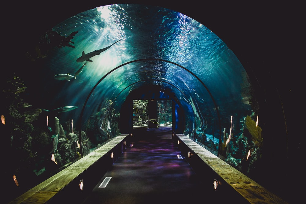hallway between bench and sharks