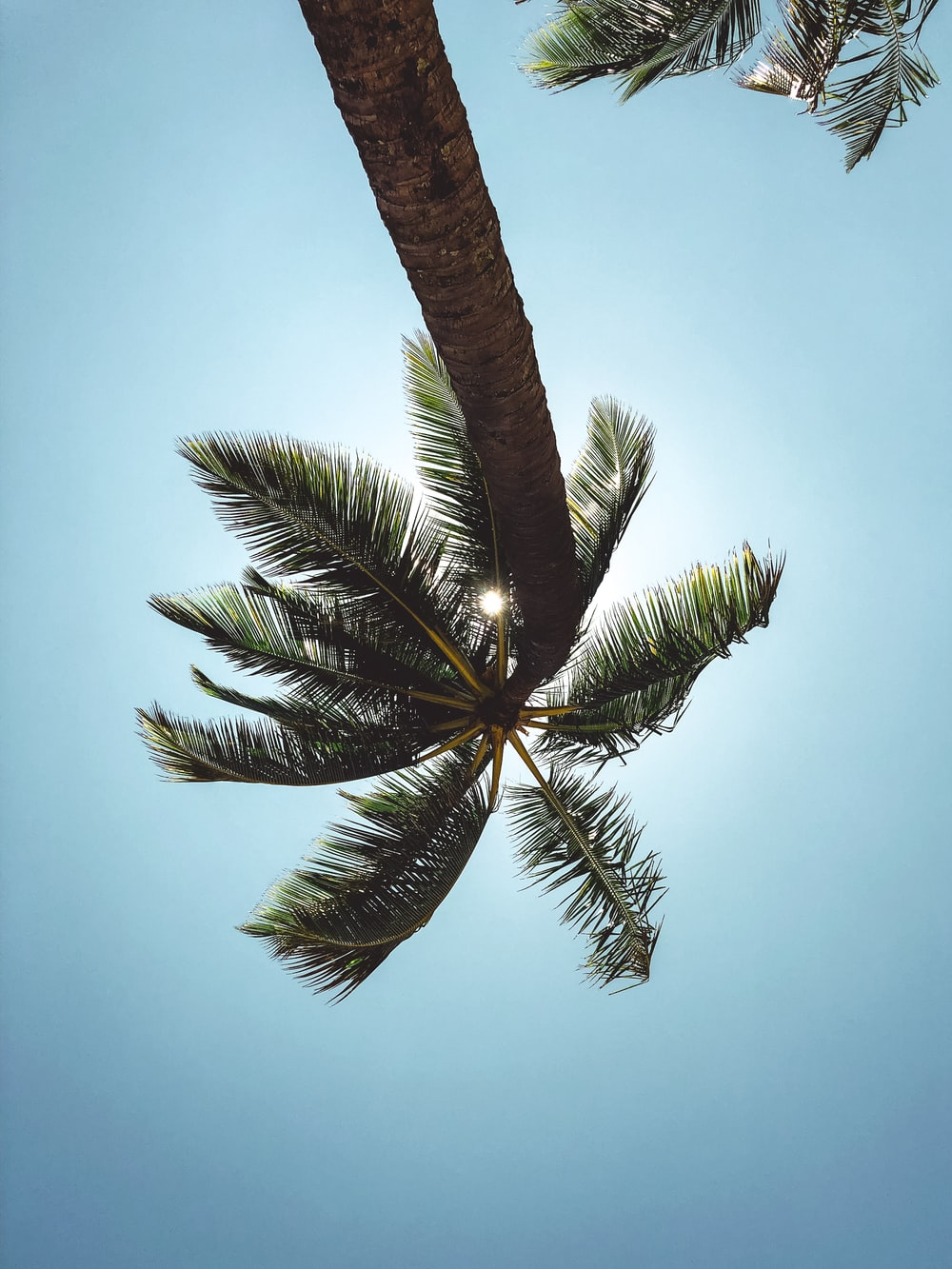 green and brown coconut tree