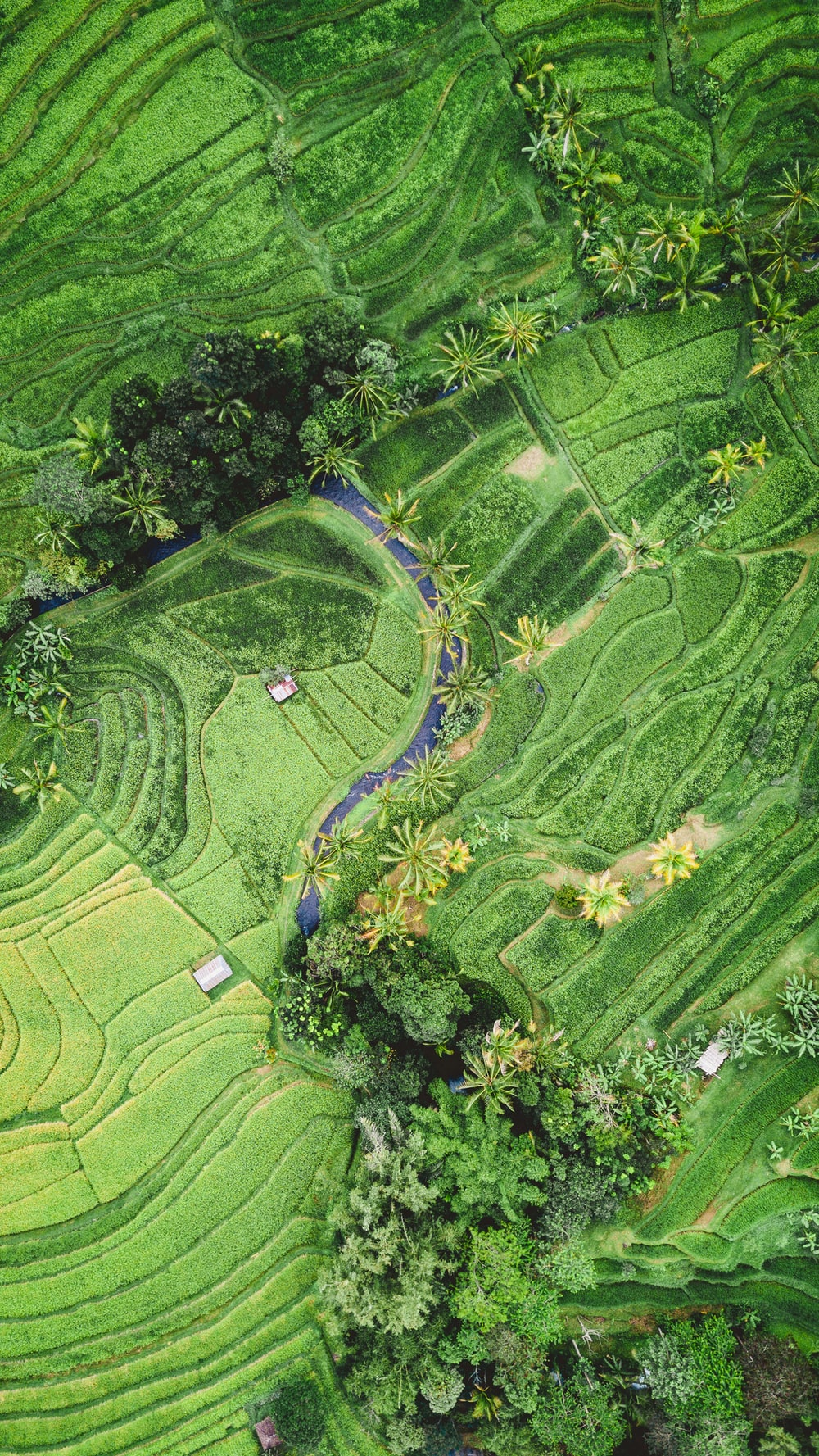 green fields and trees in aerial photography