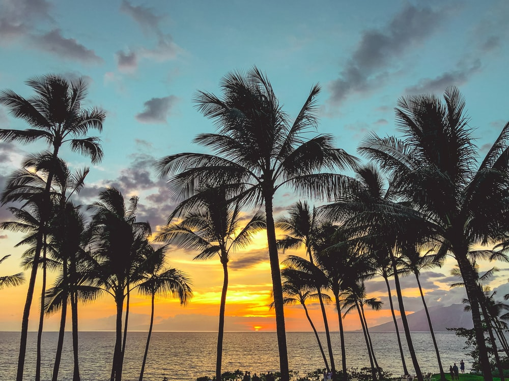palm trees facing the sea