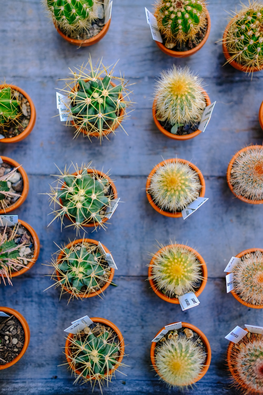 flat lay photography of green potted cacti