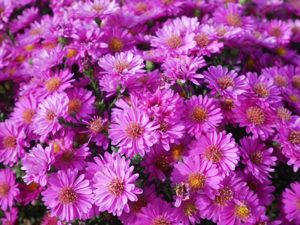 purple flowers blooming
