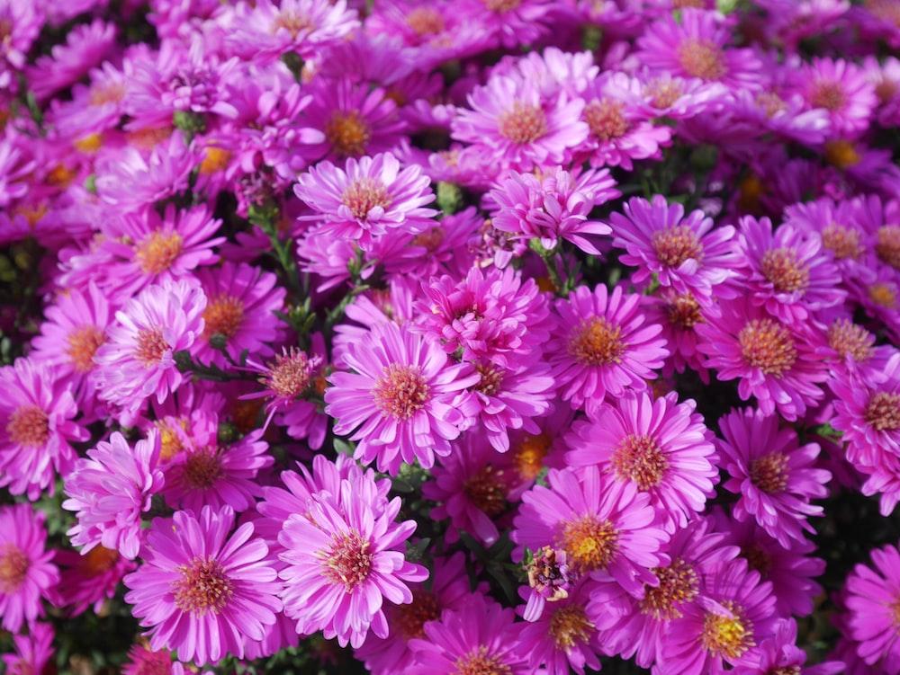 purple flowers blooming