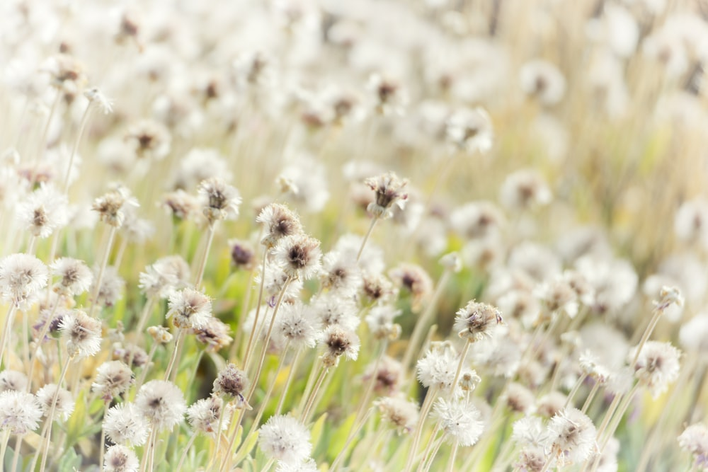 selective focus photography of brown and white flowers