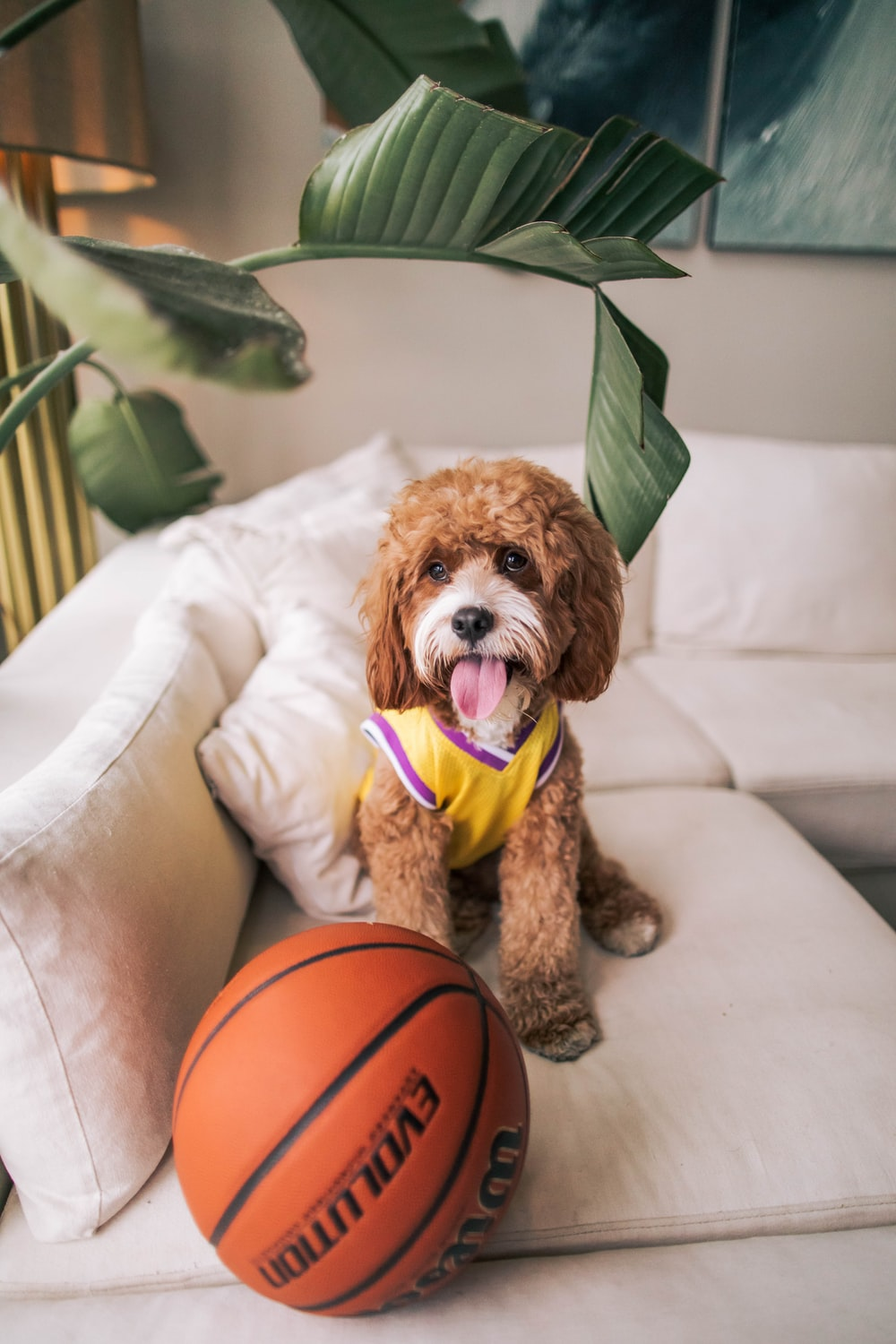 Lakers Jersey Pictures | Download Free Images on Unsplash