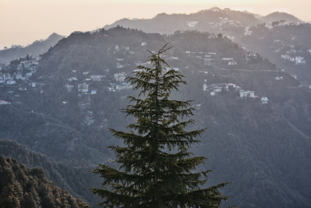 green pine tree facing hill with houses