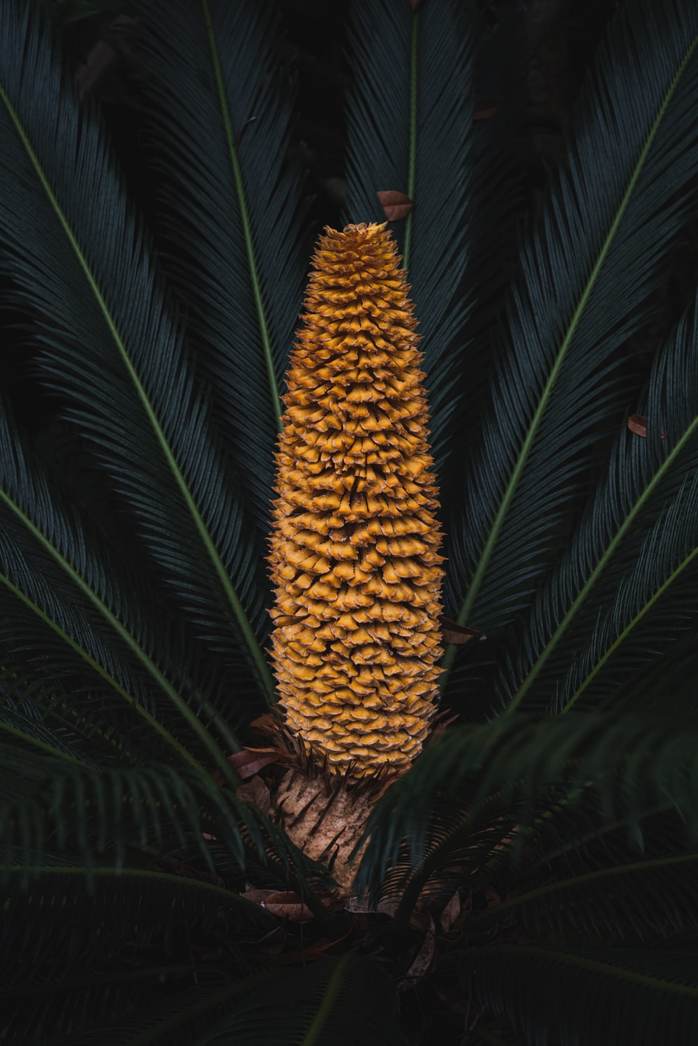 selective focus photography of yellow and green palm plant