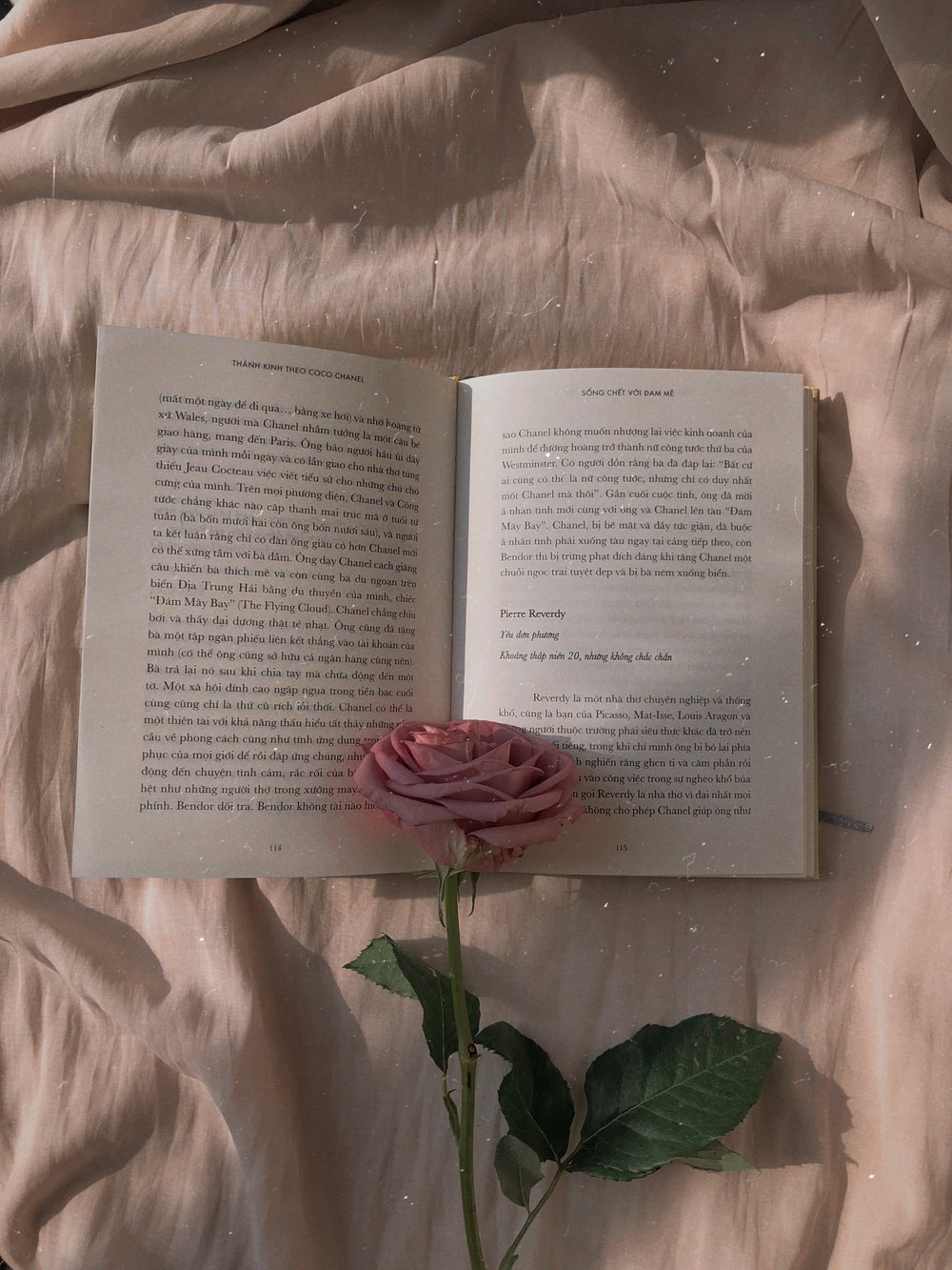 pink rose on open book
