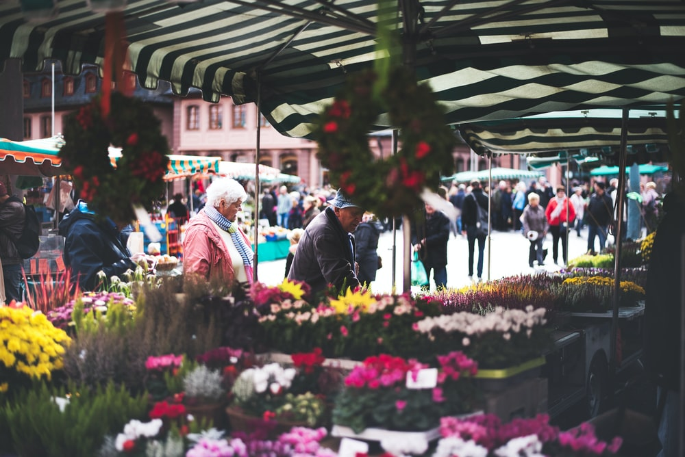 people picking flowers
