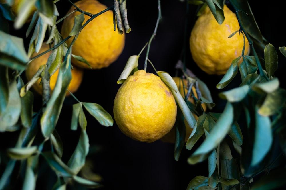 four yellow lemons