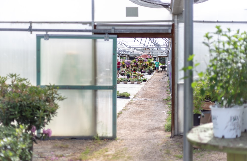 glass plant shed