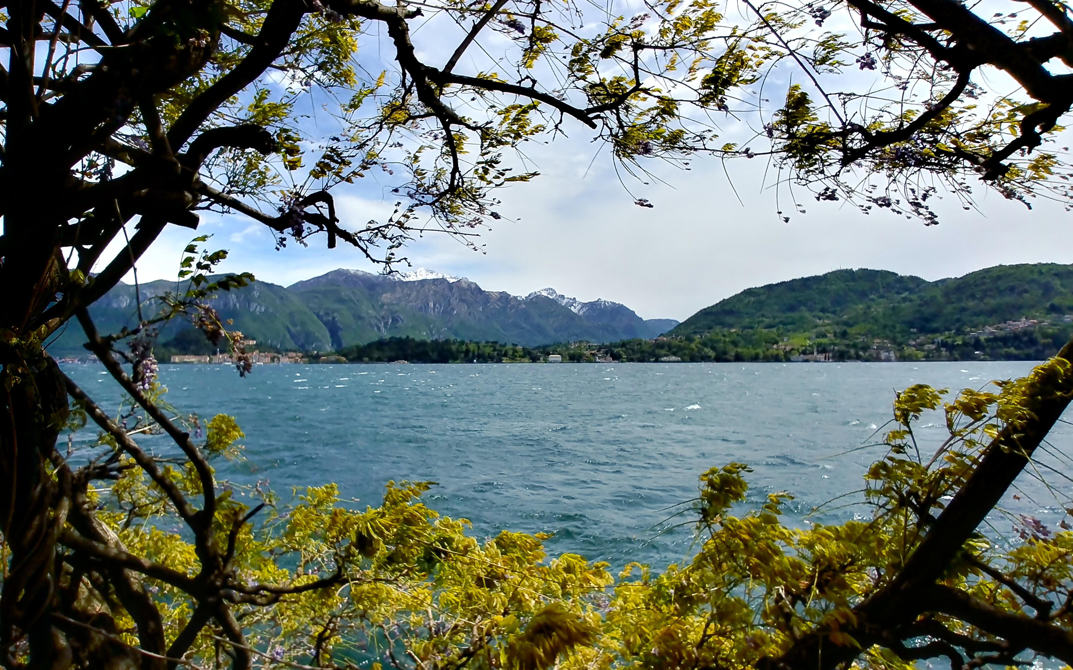 Lake view through some vegetation