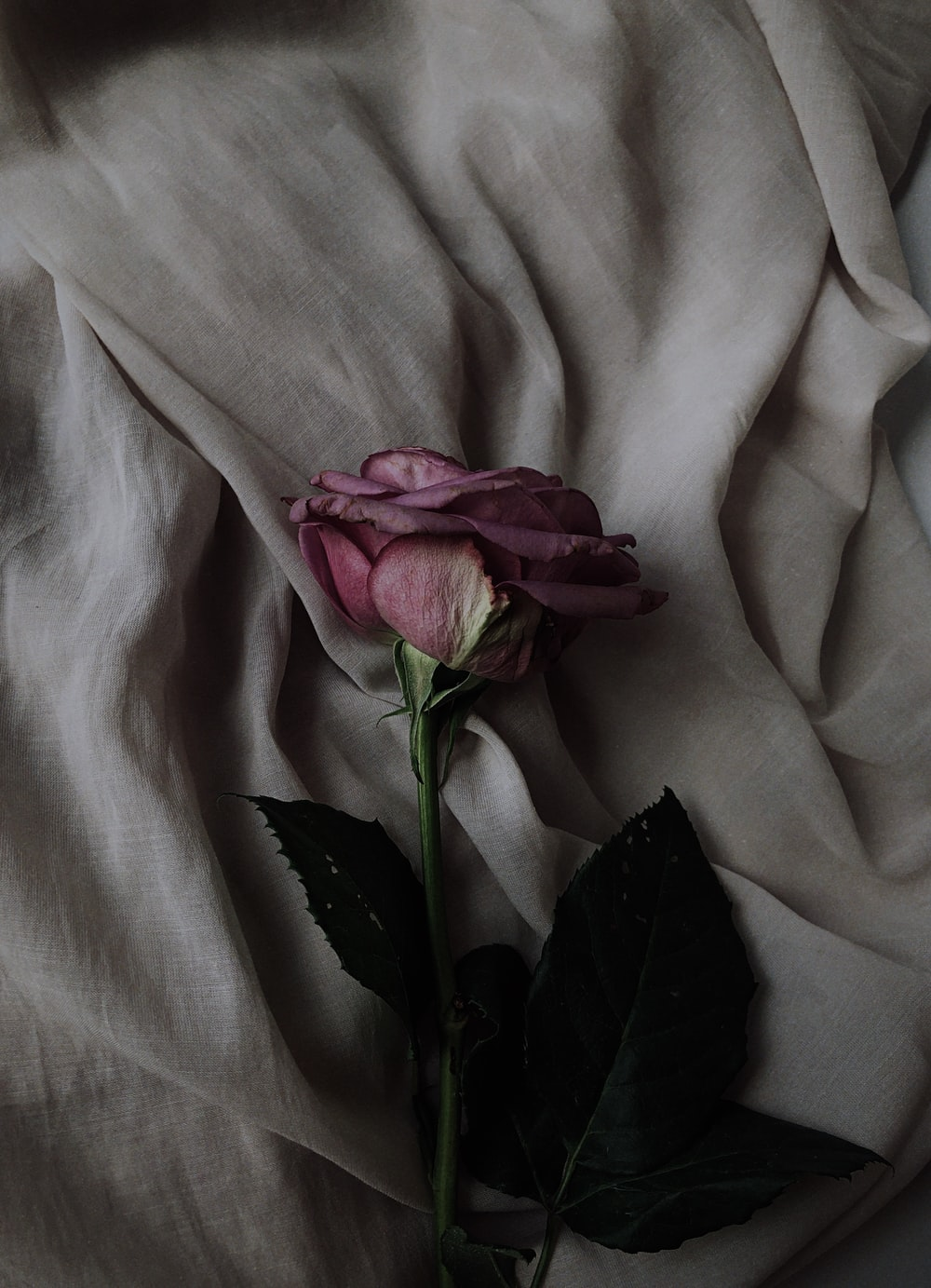 pink rose flower on gray textile