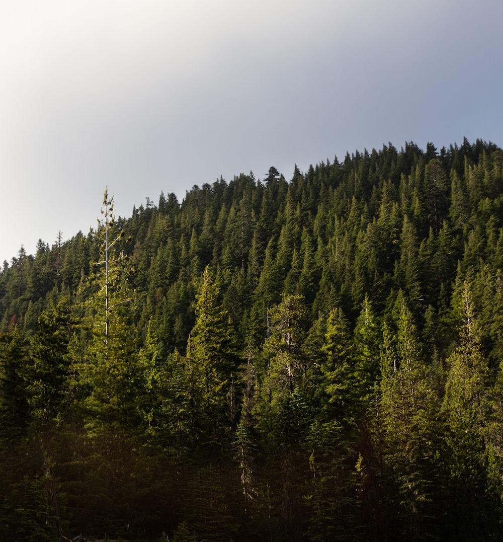 trees under white sky