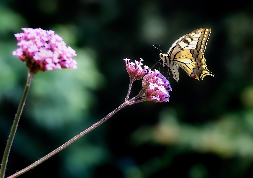 brown butterfly on the flower