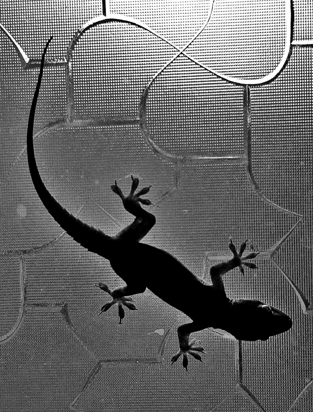 silhouette of lizard on glass
