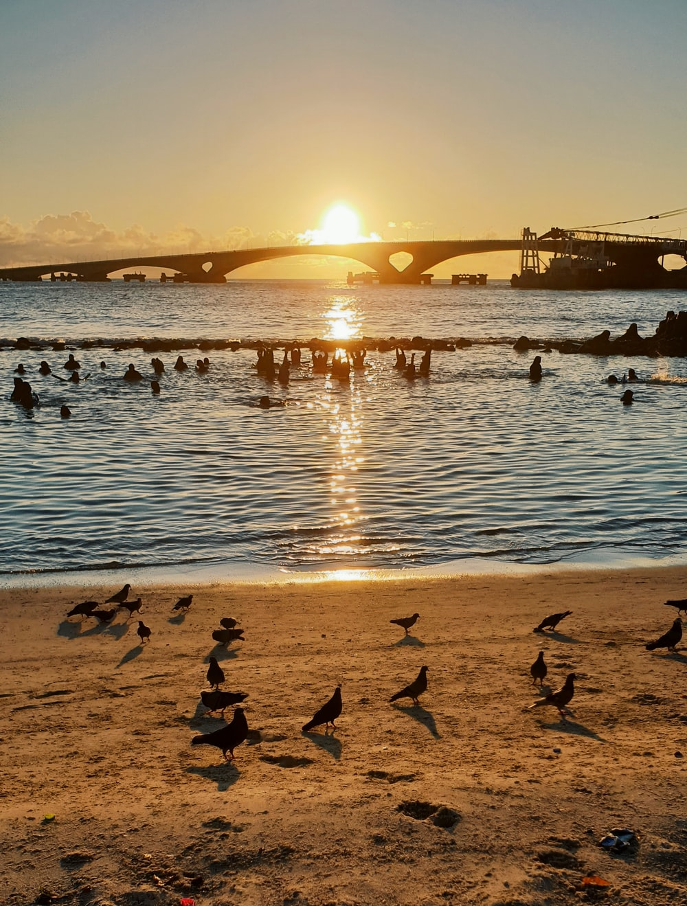 people swimming at the beach beside birds on sand dunes during sunset