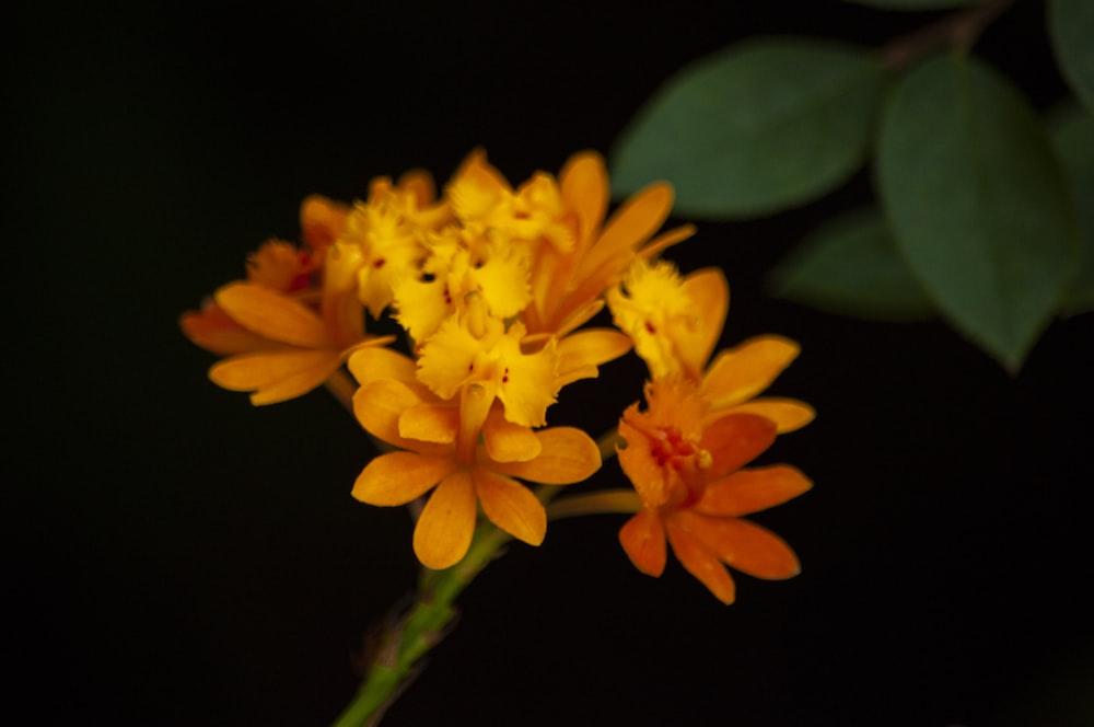 orange cluster flowers