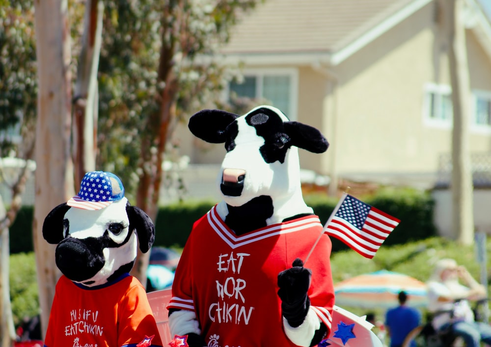 two cow mascots