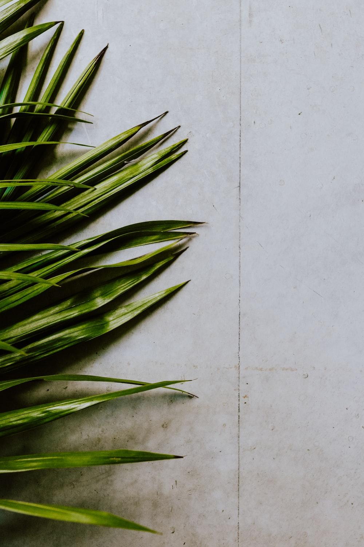 green elongated leaves