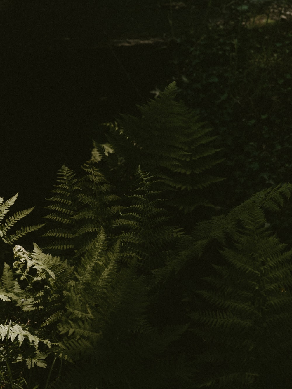 green fern plant close-up photography