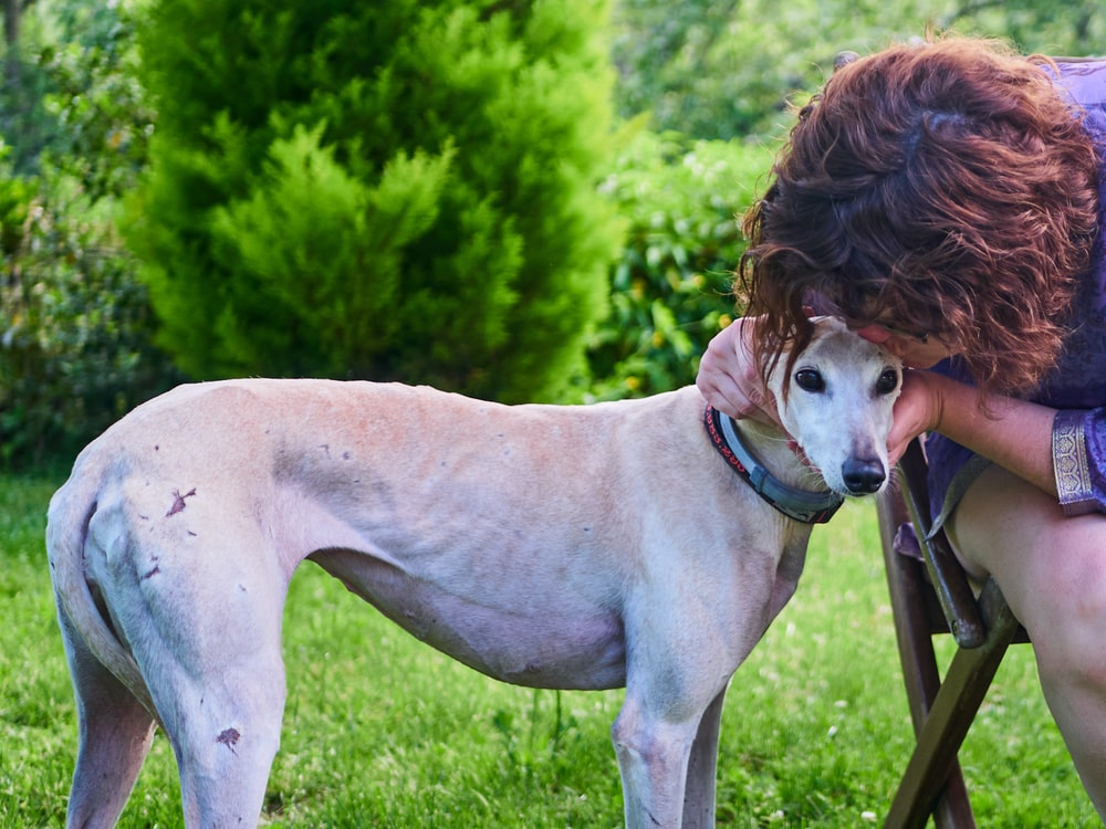 person kissing head of short-coated brown dog