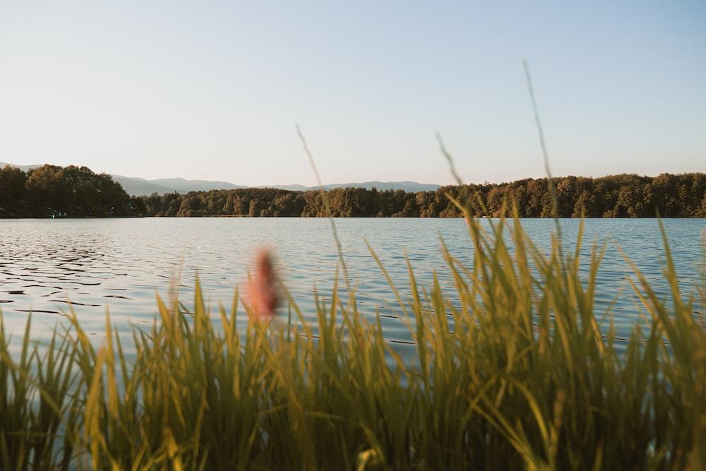 green grass near rippling body of water