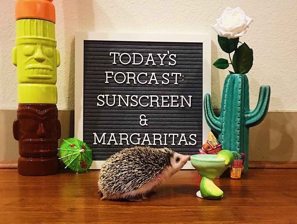 hedgehog in a brown surface near a cactus plastic figurine and totem