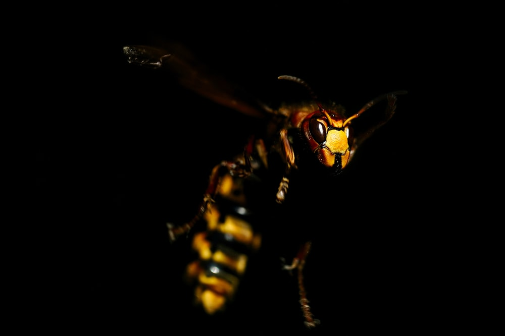 bee in mid air