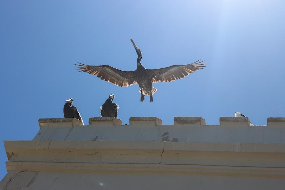 brown bird beside white building