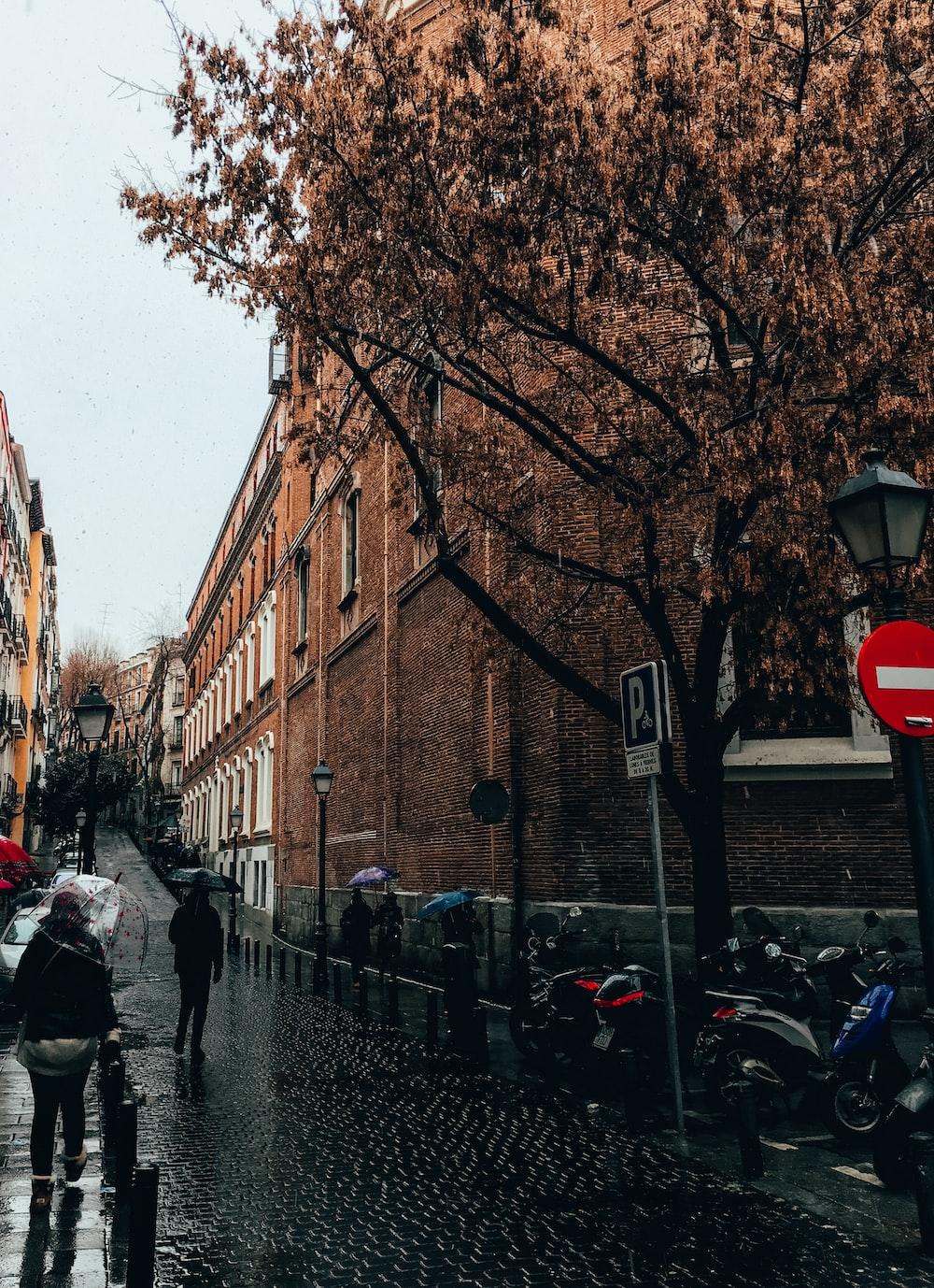 person holding umbrella walking between buildings