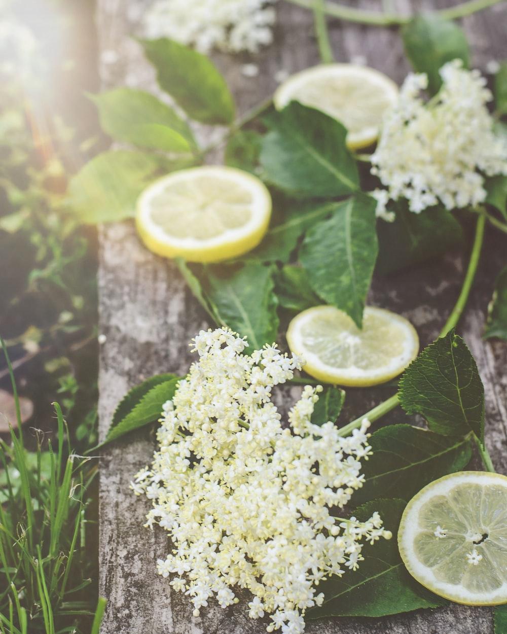 white flowers and sliced of lemon