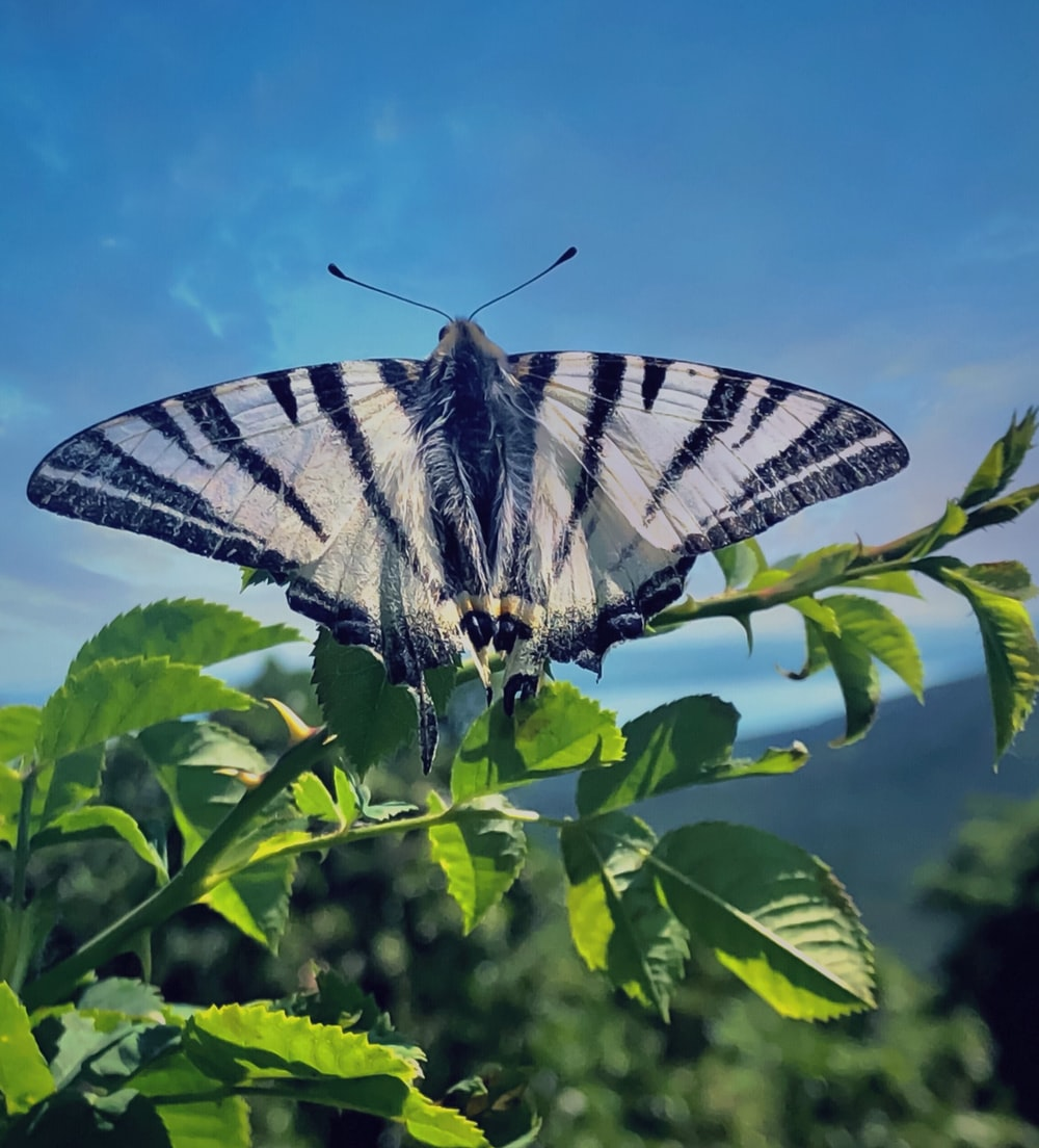 white and black butterfly perched on leaf