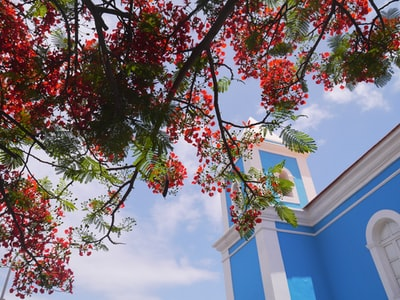 white and blue concrete building besides red and green tree cabo verde zoom background
