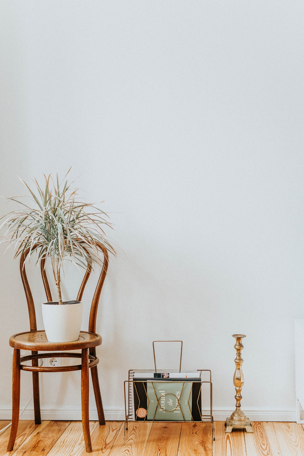 green plants on brown wooden chair