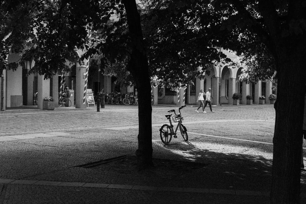 bicycle under tree