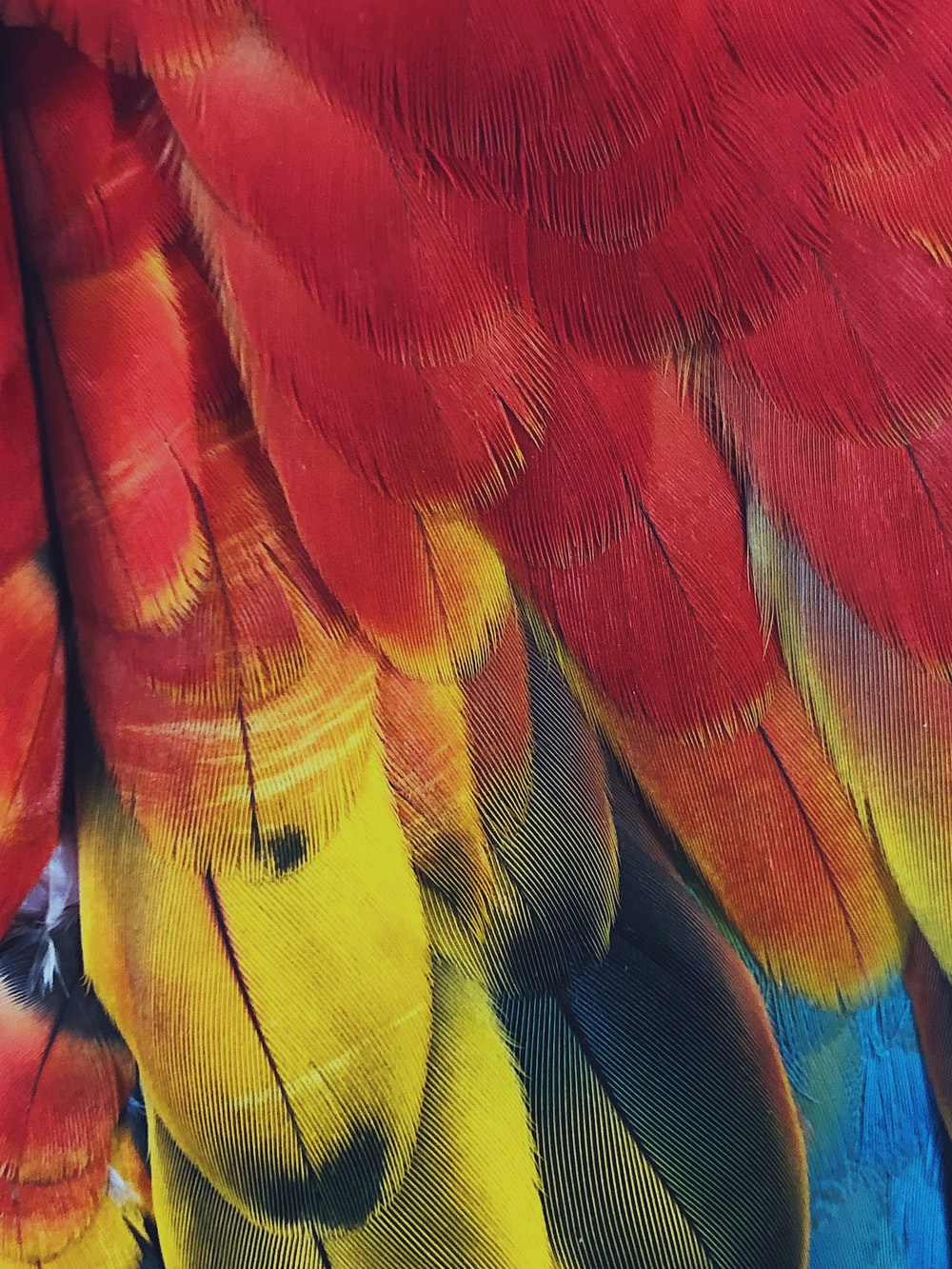 red and yellow feathers