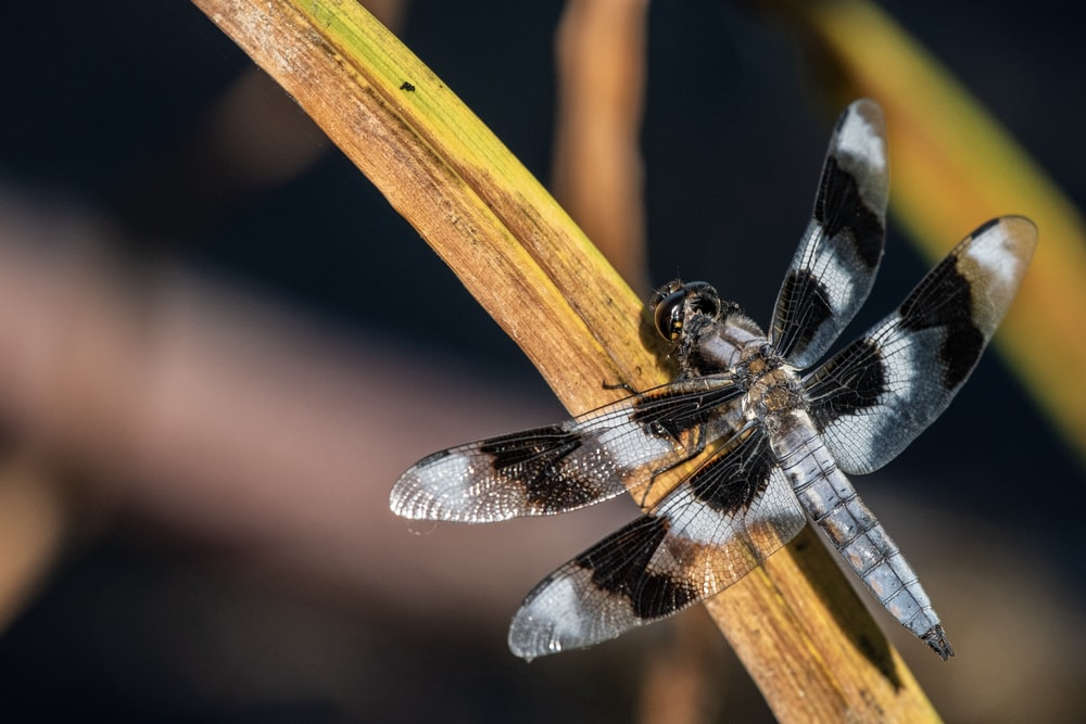 white and black dragonfly close-up photography