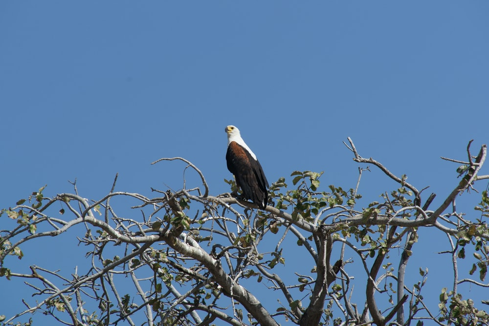 black and white eagle on tree