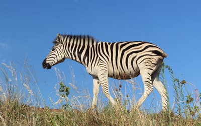 South,Africa