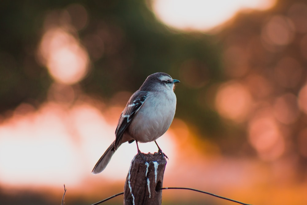 white and brown bird perched on post