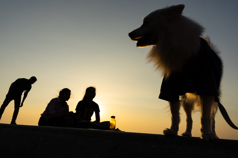 people near a dog during golden hour