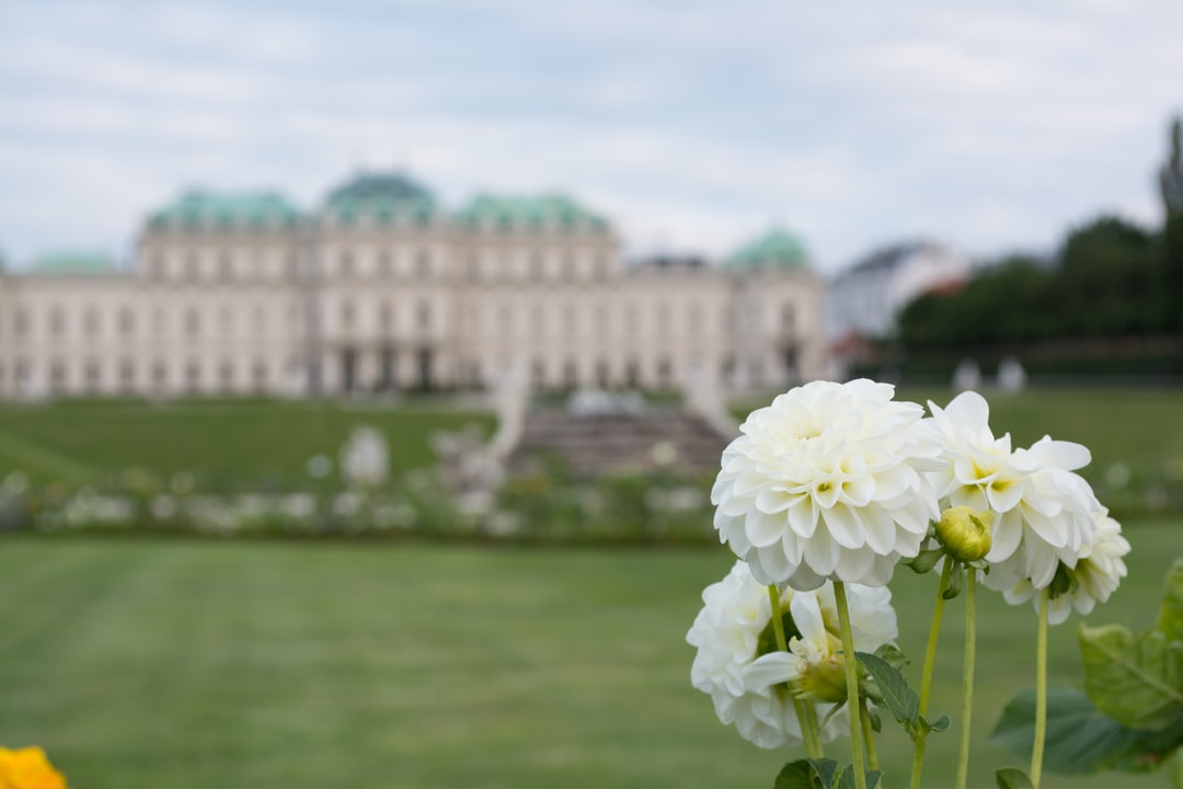 Blossom in the beautiful gardens of palace Belvedere